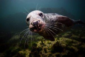 UK Diving: Farne Islands