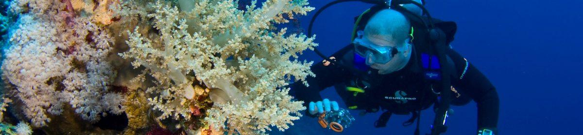 Dive Odyssea